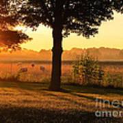 Sunrise 365 13 Art Print