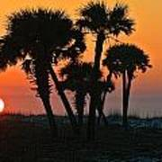 Sunrise And Group Of Palm Trees Art Print