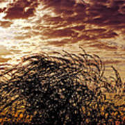 Sunrise And Lacy  Tree Art Print