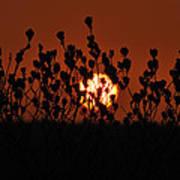 Sunrise In South Texas Art Print