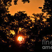 Sunrise In The Forest Art Print
