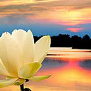 Sunrise On Lotus Lillie Art Print