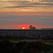 Sunrise On The Cotton Field Art Print