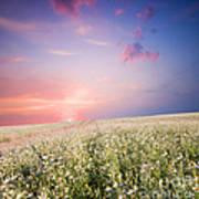 Sunrise Over Flower Land Art Print