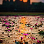 Sunrise Over The Lotus Flowers Of Art Print