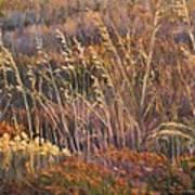 Sunrise Reflections On Dried Grass Art Print