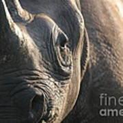 Sunrise Rhino Art Print