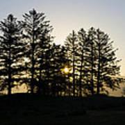Sunrise Shines Through The Pines Art Print