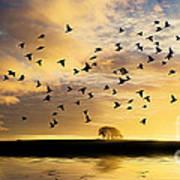 Birds Awaken At Sunrise Art Print
