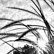 Sunrise Sunburst Art Print