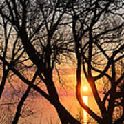 Sunrise Through The Chaos Of Willow Branches Art Print