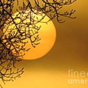 Sunrise Through The Fog Art Print