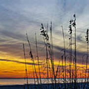 Sunset And Grasses Art Print