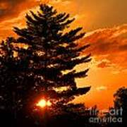 Sunset And Pine Tree  Art Print