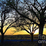 Sunset And Trees Art Print