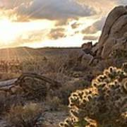 Sunset At Joshua Tree National Park Art Print
