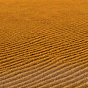 Sunset At The Great Sand Dunes National Art Print