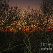 Sunset At The Presidio   Art Print