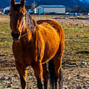 Sunset Bay Horse Heber Valley Utah Art Print