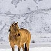 Sunset Horse In Montana Art Print