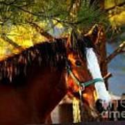 Sunset Horse Art Print