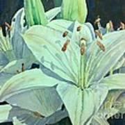 Sunset Lily Art Print
