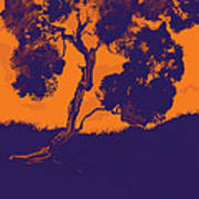 Sunset Madrone Art Print