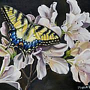 Sunset On A Swallowtail Art Print