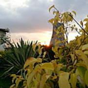 Sunset On Leaves Art Print