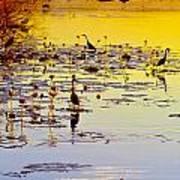 Sunset On Parry's Lagoon Art Print