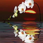Sunset Orchids Art Print