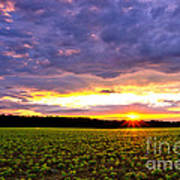 Sunset Over Farmland Art Print by Olivier Le Queinec