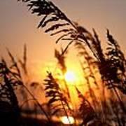 Sunset Seaoats Art Print