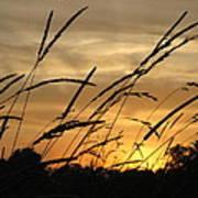 Sunset Sentinels Art Print