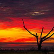 Sunset Solitude Art Print