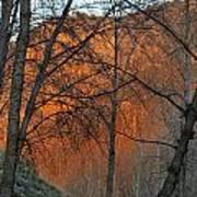 Sunset Through The Forest Art Print
