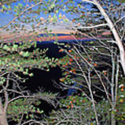 Sunset Thru The Pines Art Print