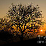 Sunset Tree Art Print by Anne Gilbert