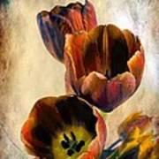 Sunset Tulips Art Print