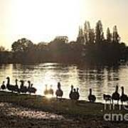 Sunset With Geese On The Thames Art Print