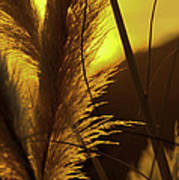 Sunset With Reeds Art Print