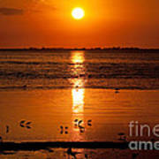 Sunset With The Birds Photo Art Print