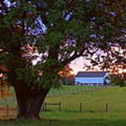Sunset With Tree Art Print