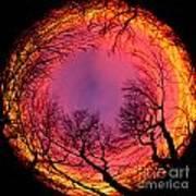 Sunset World Of Trees Art Print