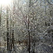 Sunshine And Snow Art Print