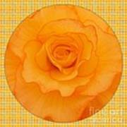 Sunshine Begonia Art Print