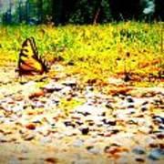 Sunshine Butterfly Art Print