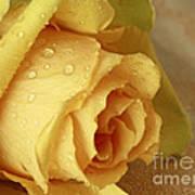 Sunshine Delight Yellow Rose Art Print