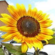 Sunshine In Country Farm Art Print