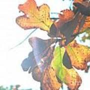 Sunshine Leaves Art Print